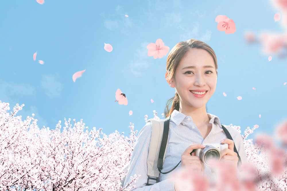 cherry-blossom-festival-from-april-13-to-15