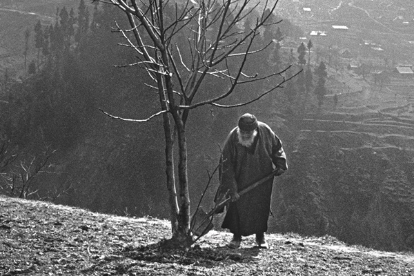 the-man-who-planted-a-thousand-trees_th